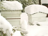 Hives-in-snow-group2-773415