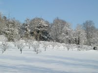 orchard-in-snow-766730