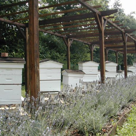 Bee Heaven with beehives