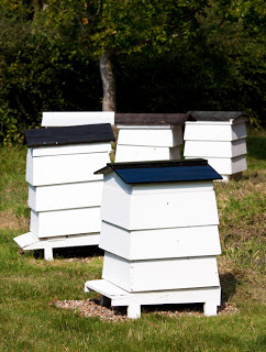 Urban Beekeeping- Time to keep your own honeybees!