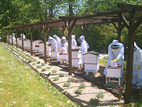 Beekeeping Course Ends, Next one in July!