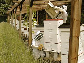 Honey Shop in full speed.