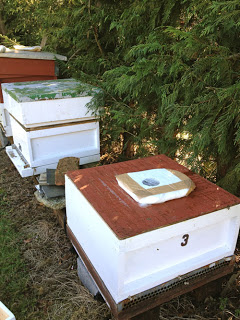 Feed your bees if necessary! March a dangerous time.