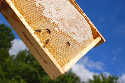One- Day Introductory Beekeeping Session May 10th 2014. Book Now Online