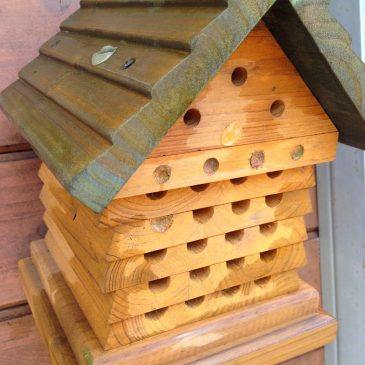 Bees find our Shop Nature Habitat
