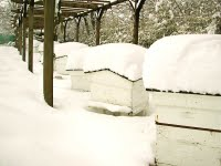 Hives-in-snow-group-711005