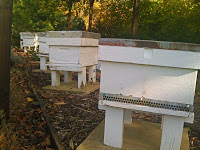 Time to close your hives down for the winter