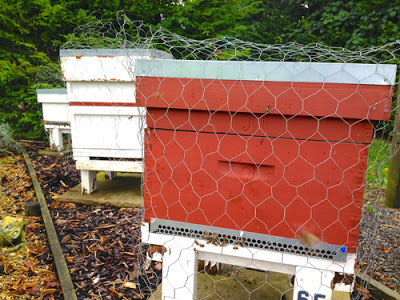 Time To Protect Your Hives!- 5 tips keeping them safe.