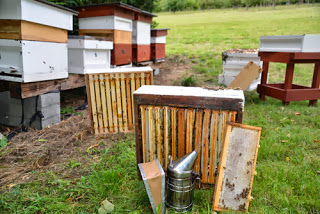 October Beekeeping Advice- Plan for next year now!