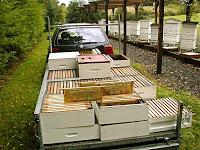 Honey Harvest Time.