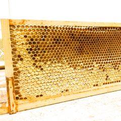 Pollen-Frame-1