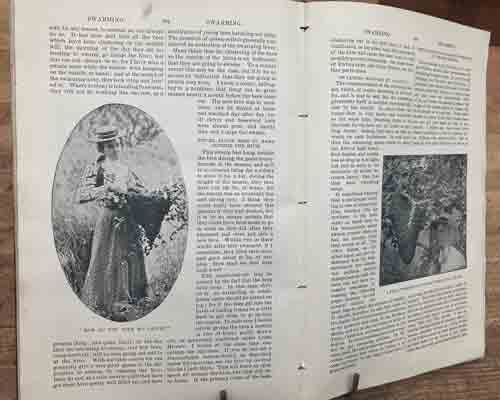 ABC and XYZ of Bee Culture Encyclopaedia-1908 100s of illustrations