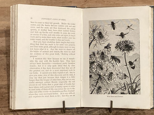 About Bees-1st Ed British 1888- 40 illustrations