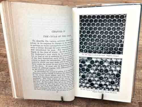 Beekeeping-1947 British Life of the honeybee, 100s of drawing